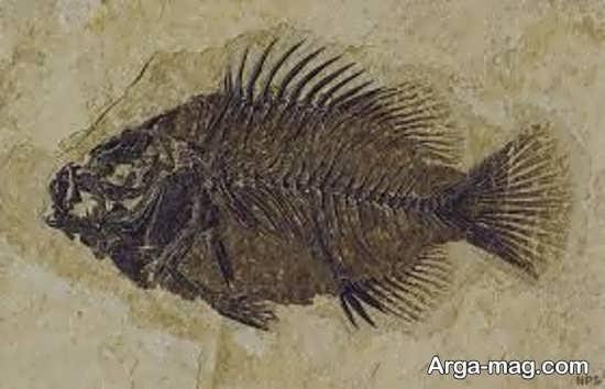 عکس از پیکره ی ماهی