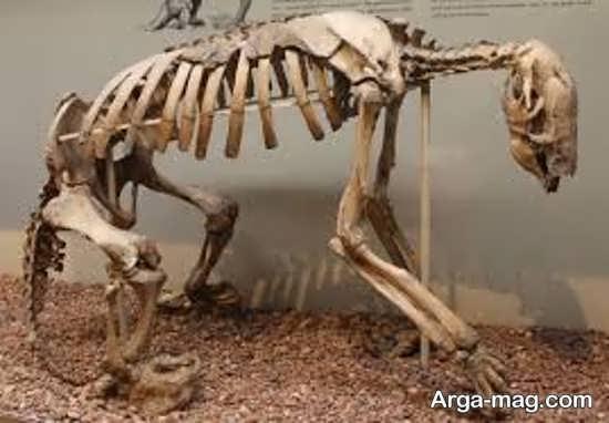عکس از استخوان های یک دایناسور