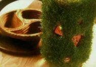 کاشت سبزه روی کوزه
