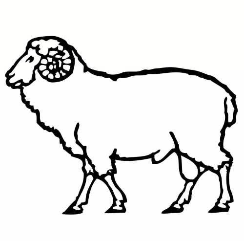 نقاشی گوسفند برای کودکان دختر و پسر