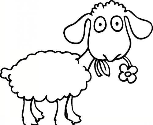 رنگ آمیزی خلاقانه گوسفند