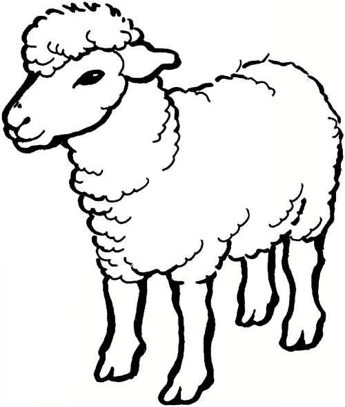 نقاشی جالب و خلاقانه گوسفند