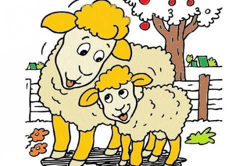 رنگ آمیزی گوسفند