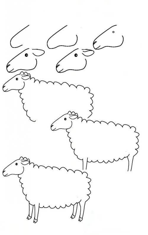 مراحل کشیدن گوسفند