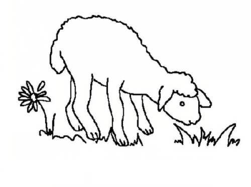 رنگ آمیزی گوسفند برای بچه ها