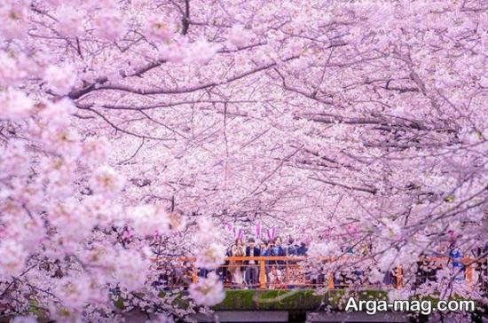 پارک اینوکاشیرا