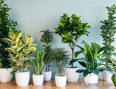 داشتن گیاه شاداب و سالم