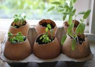 تقویت خاک گلدان با روش خانگی