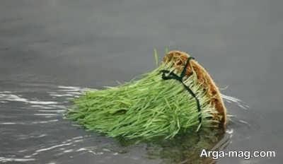 سپردن سبزه به آب