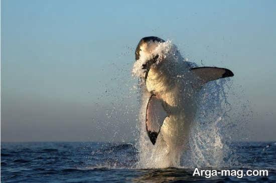 عکس پرش نهنگ
