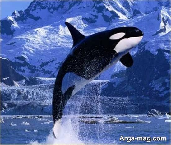نوع متنوع نهنگ
