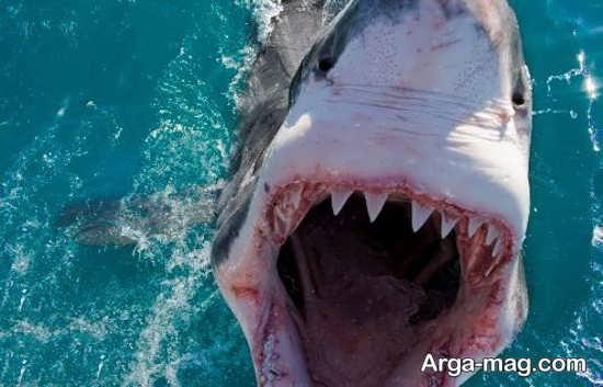 عکس ترسناک نهنگ