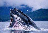 عکس نهنگ وحشتناک و بزرگ