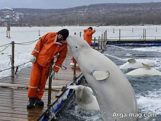 عکس نهنگ در لحظه