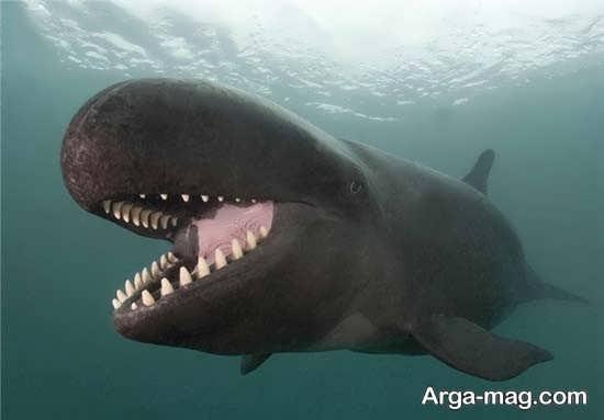 نهنگ هولناک و غول پیکر در اقیانوس