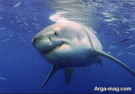 تصویر تماشایی نهنگ