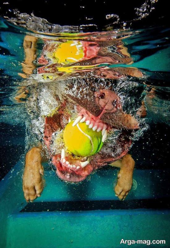 شنا کردن سگ