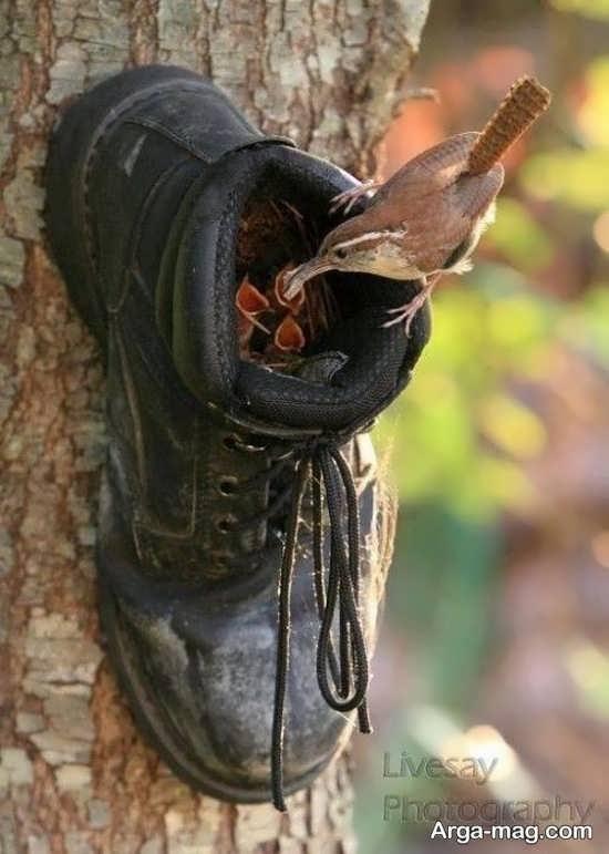 ساخت لانه با کفش کهنه