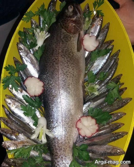 طراحی زیبا ماهی