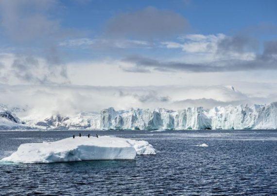 در قطب جنوب سبزی کاشتند