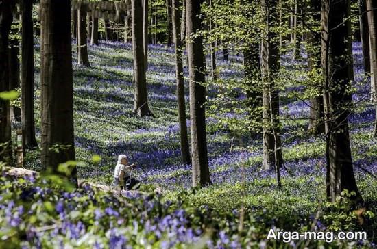 جنگل زیبا در بلژیک