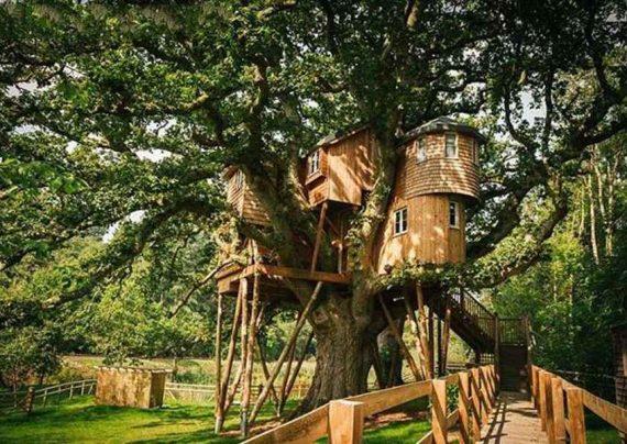 ساخت خانه ای درختی در انگلستان + عکس