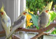توت خوردن گروهی پرندگان در آمریکا