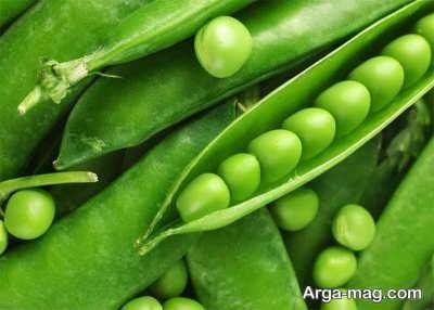 لوبیا سبز و برداشت آن