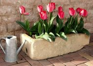 کاشت گل لاله