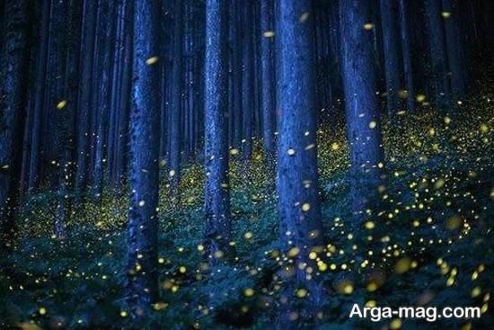 جنگل های ژاپن
