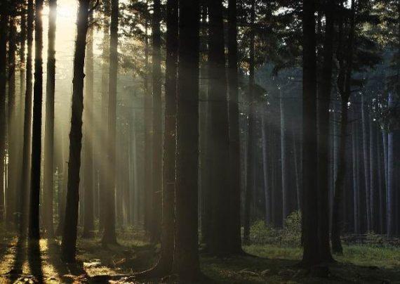 تصویری زیبا از یک جنگل با نورپردازی کرم های شب تاب