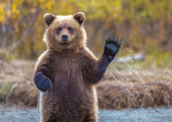 تصاویری متنوع از انواع خرس ها در جهان