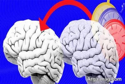 انتقال دادن خاطرت مغز حلزون