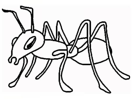 رنگ آمیزی زیبا مورچه