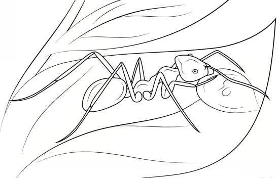 نقاشی جالب و کودکانه مورچه