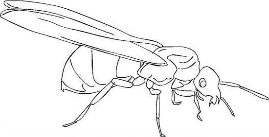 طرح مورچه برای کودکان
