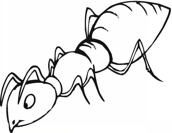 رنگ آمیزی زیبا و جالب مورچه