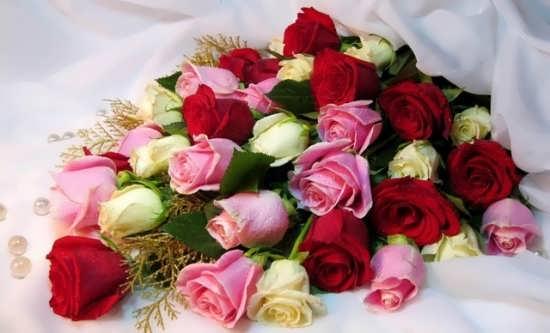 پروفایل گلهای رز