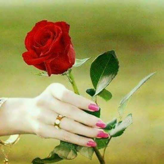 عکس پروفایل گل رز دخترانه