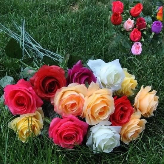 عگس پروفایل گل رز رنگی و خوشگل