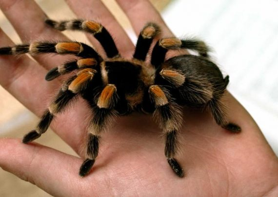 تعبیر خواب عنکبوت