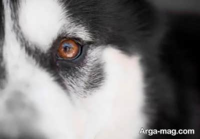 عکاسی-از-حیوانات خانگی