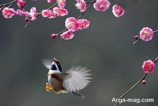 طبیعت کشور چین
