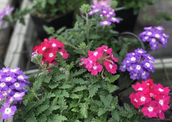 تصویری از گل های گرمسیری