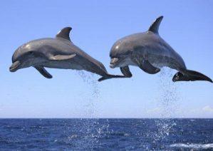 معرفی حیوانات با نمک اما خطرناک