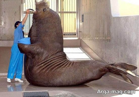 حیوانات عظیم الجثه