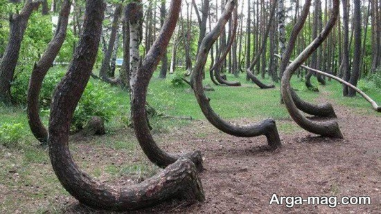 جنگل های زیبا در جهان