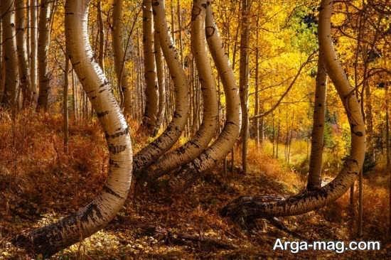 درختان کهنسال پاییزی