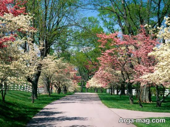 شکوفه های درختان زیبا