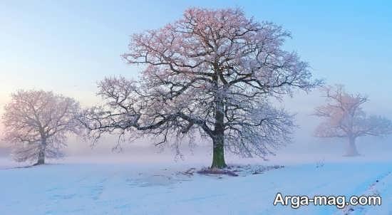 عکس درخت برای پس زمینه